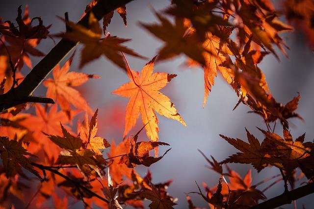 Podzimní dávku kreativity přinese podzimní povýšení se jménem Fall Creators Update (Zdroj: Pixabay.com)