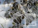 Fotky CZ - First winter