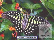 Butterflies Screensaver