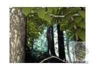 Forest Life 3D screensaver - 7art