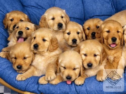 Cheerful Dogs Screensaver